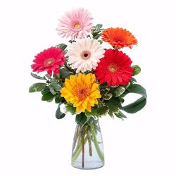 Gerbera Smiles from Verzaal's Florist & Events in Wilmington
