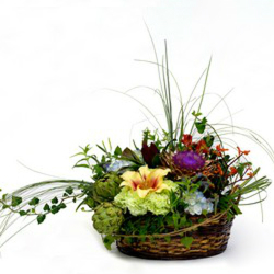 Bold and Brilliant from Verzaal's Florist & Events in Wilmington