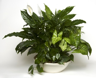 Green Planter from Verzaal's Florist & Events in Wilmington