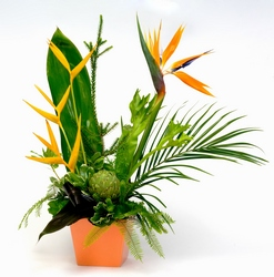 Tropical Paradise from Verzaal's Florist & Events in Wilmington