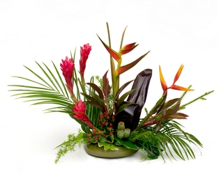 Hawaiian Sunset from Verzaal's Florist & Events in Wilmington