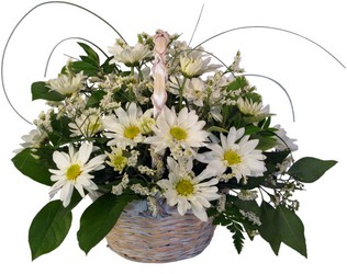 Daisy Dreaming from Verzaal's Florist & Events in Wilmington