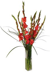 Simply Gladiolus from Verzaal's Florist & Events in Wilmington